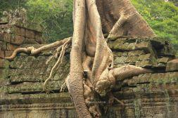 AngkorWatTapinaklari97