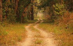 ChitwanJeepSafari36
