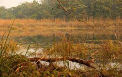 ChitwanJeepSafari38