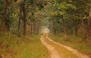 ChitwanJeepSafari44