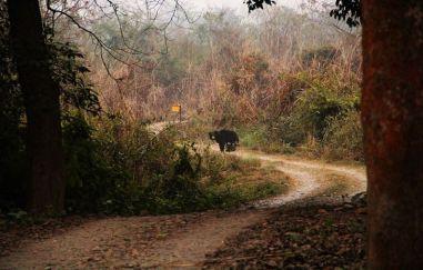 ChitwanJeepSafari54