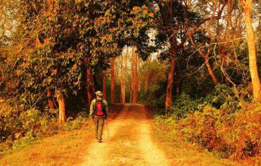 ChitwanOrmanYuruyusu09