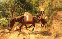 Pokhara15