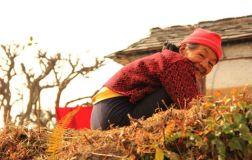 Pokhara54