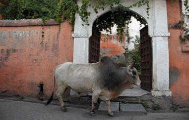 Udaipur34