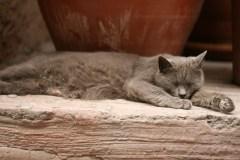 Beyoğlu'nda uykucu kedi