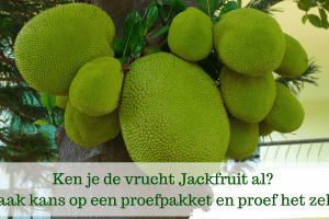 Jackfruit review