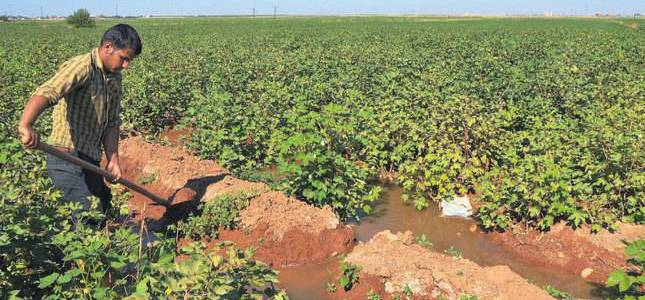 After the Islamic State the agricultural production struggles to recover in parts of Iraq