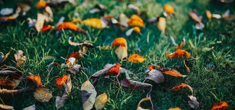 Help je tuin de winter door