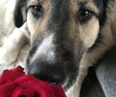 Welke planten zijn giftig voor mijn hond?