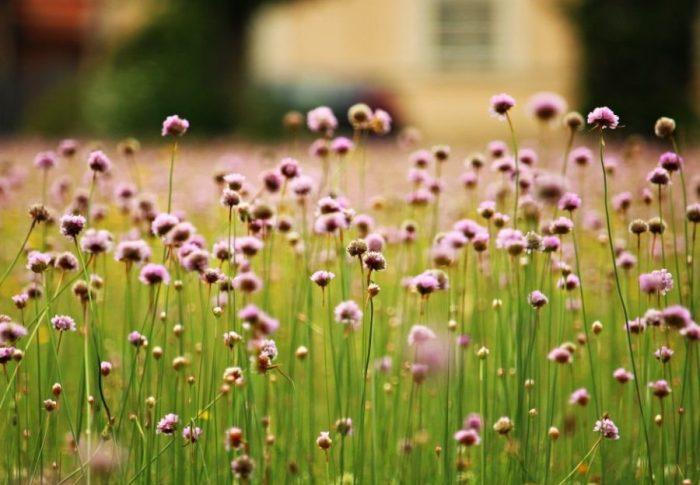 Begin het tuinseizoen goed met deze handige tips