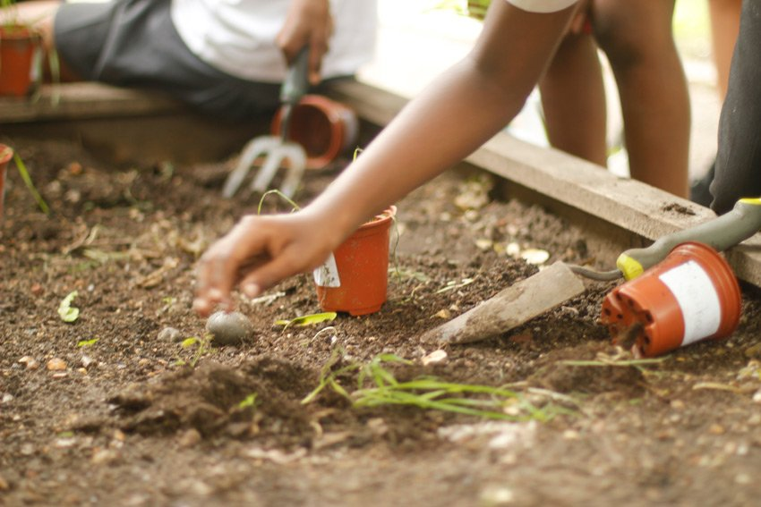 Children digging in the school garden