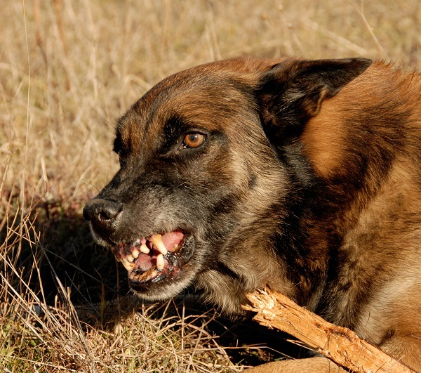 Personal Injury Lawsuits for Dog Bites in Nevada