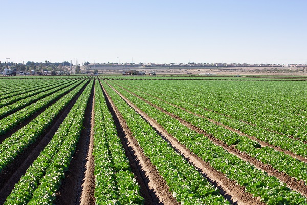 Workplace Injury Protections for Agricultural Laborers
