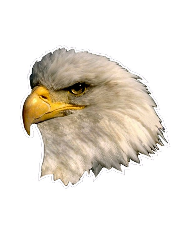 "Eagle Magnet or Sticker for Indoor or Outdoor Use 5"" x 5"""