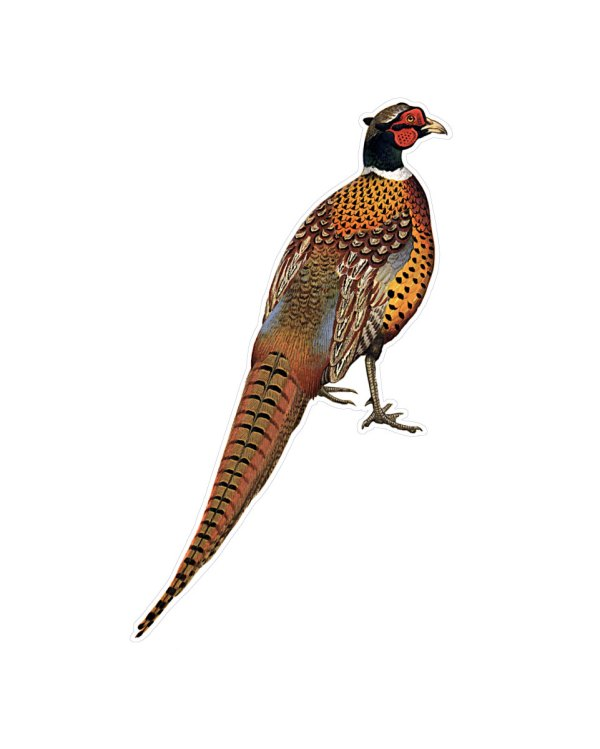 "Pheasant Magnet or Sticker for Indoor or Outdoor Use 8.5"" x 5"""