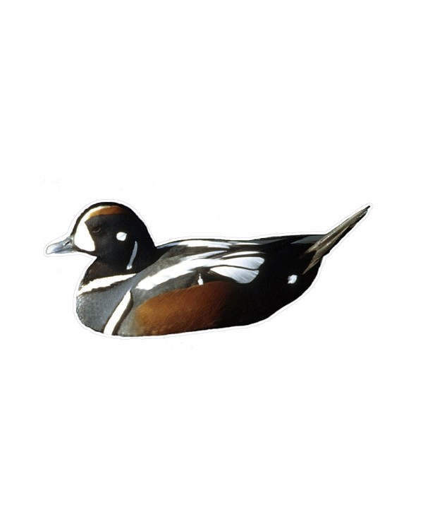 """Duck Magnet or Sticker for Indoor or Outdoor Use 8.5"""" x 4"""""""