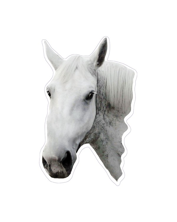 White Horse Head Magnet