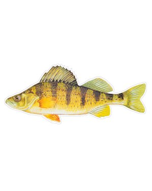 "Yellow Perch Magnet or Sticker for Indoor or Outdoor Use 7"" x 3"""