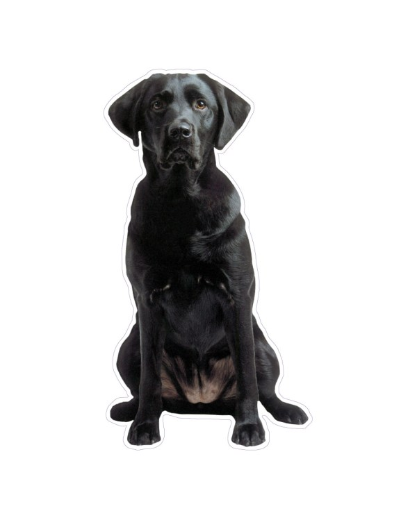 "Black Lab Magnet or Sticker for Indoor or Outdoor Use 6"" x 4"""