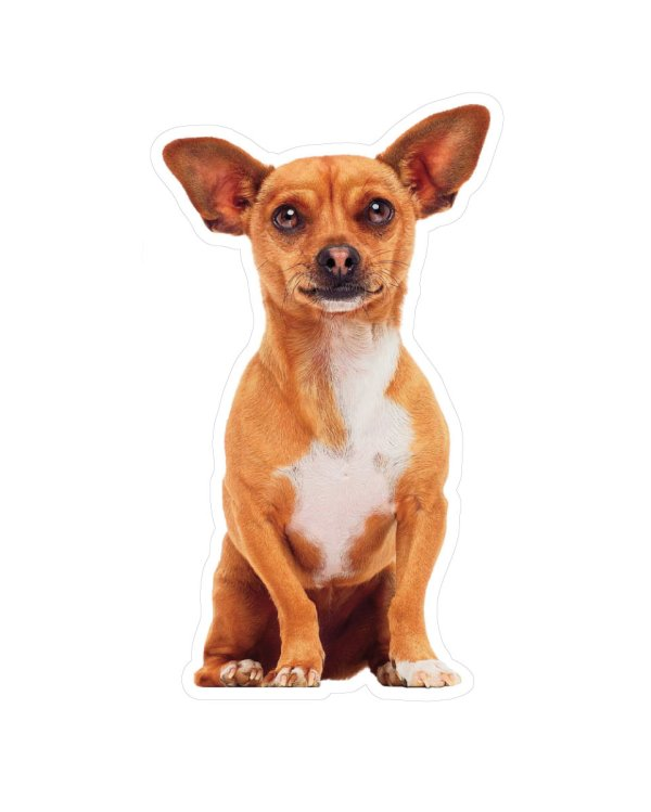 """Chihuahua Magnet or Sticker for Indoor or Outdoor Use 3"""" x 6"""""""
