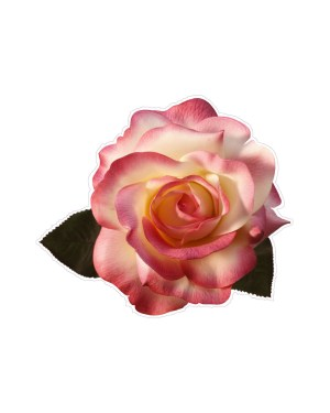 "Rose Magnet or Sticker for Indoor or Outdoor Use 5"" x 4"""