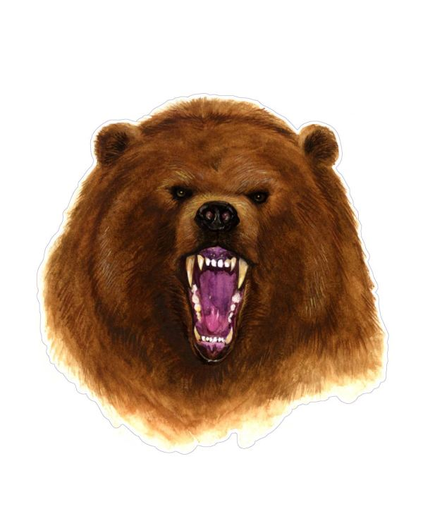 "Brown Bear Magnet or Sticker for Indoor or Outdoor Use 5.5"" x 5"""
