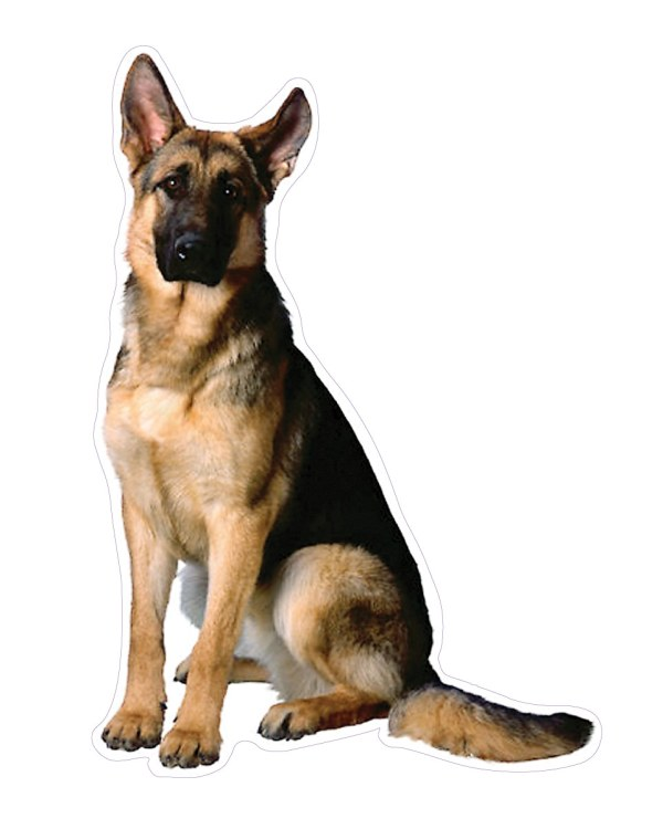 "German Shepherd Magnet or Sticker for Indoor or Outdoor Use 7"" x 4.6"""