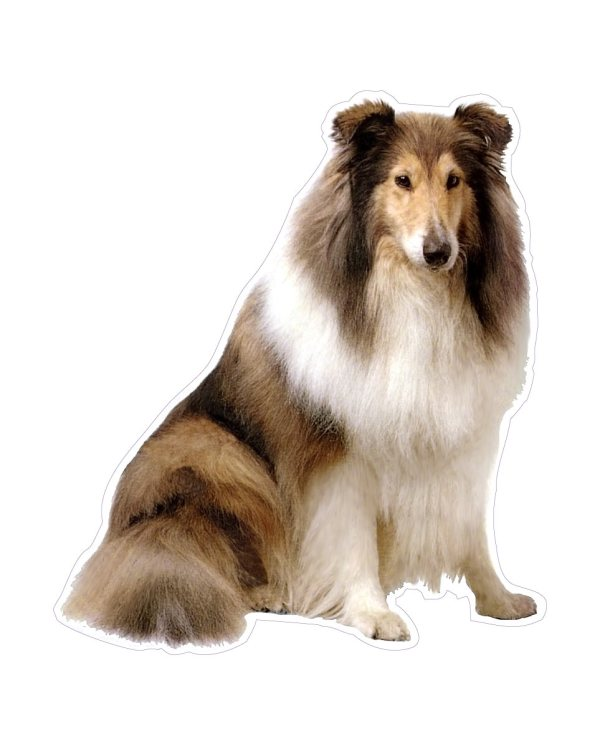 """Lassie Magnet or Sticker for Indoor or Outdoor Use 6"""" x 5"""""""