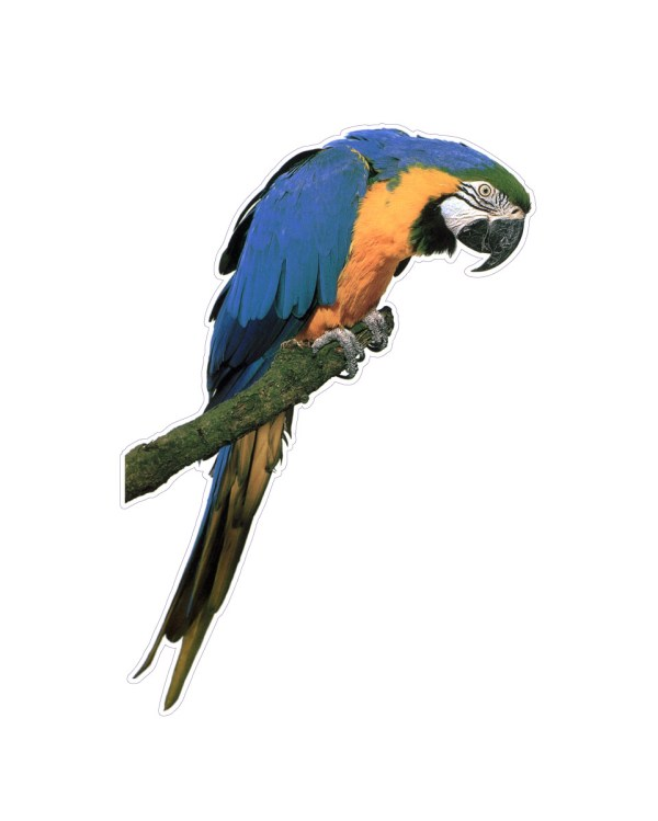 """Parrot Magnet or Sticker for Indoor or Outdoor Use 8"""" x 5.5"""""""