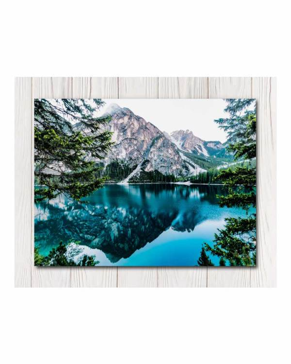 Daylight Forest Wall Canvas in 4 sizes