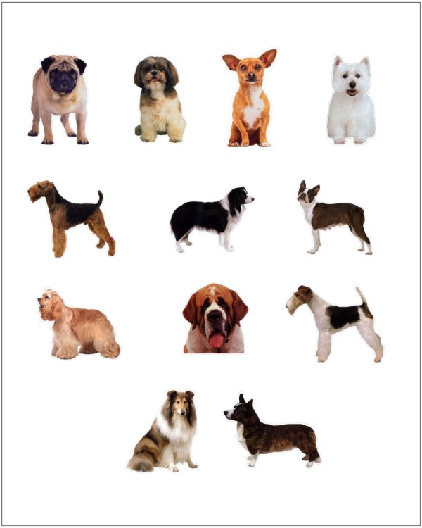 Dog Magnet Collection