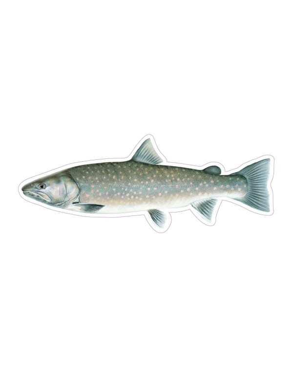 Bull Trout Sticker & Magnet