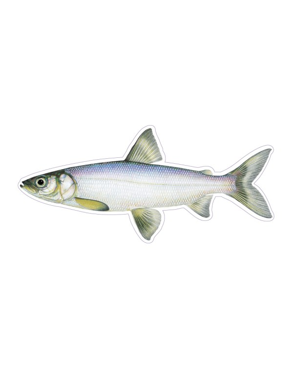 Lake Herring Sticker & Magnet