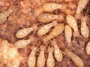 شركة مكافحة النمل الابيض بضرماء
