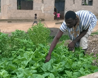 Feeding Ghana's growing urban population - Is home gardening the ...