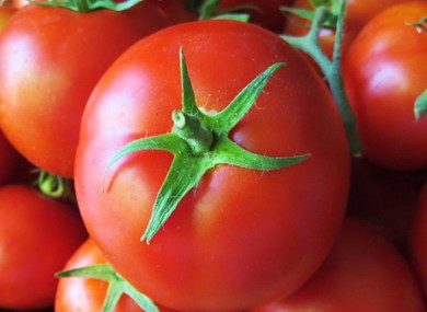 Tomato farmers cry for processing plant