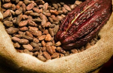 Improved seed development programmes would improve cocoa production