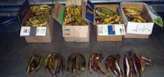 Cocaine was stuffed inside plantains, a sour, banana-like fruit, on a flight from Ghana (Photo: UK Border Force/PA)