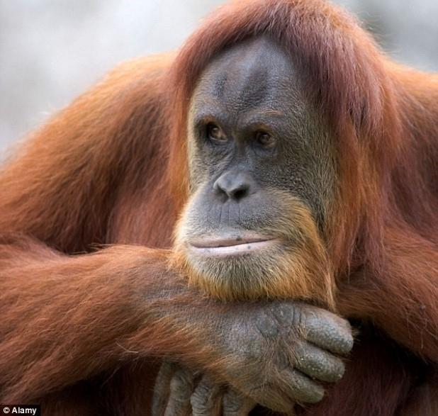 Greap Ape