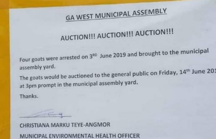 Trending: GA West Municipal Assembly To Auction 4 Arrested Goats Today