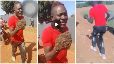 Photo of Thieves In Pain Return Items They Stole After Swarm Of Bees Taught Them A Lesson – Video Below