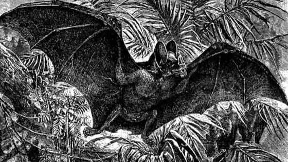 an illustration of a large bat from Brehm's Life of Animals