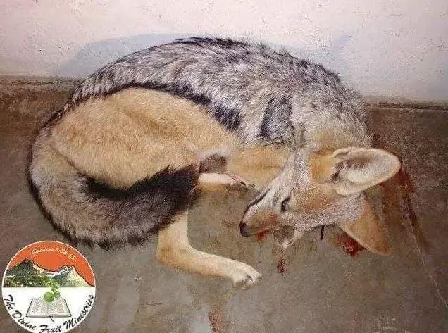 Apostle kills dog3 - Pastor kills dog, eats it raw during service