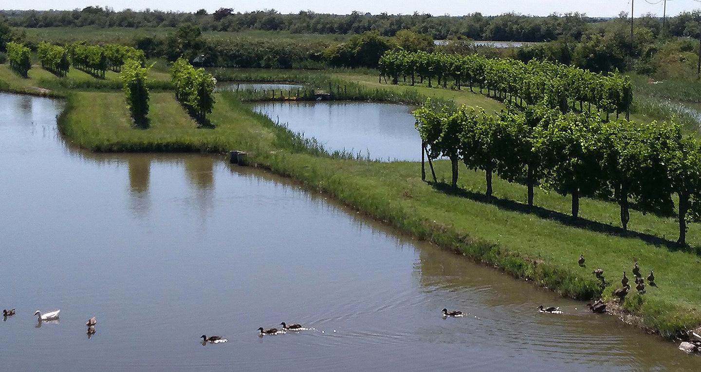vini marano oasi natura