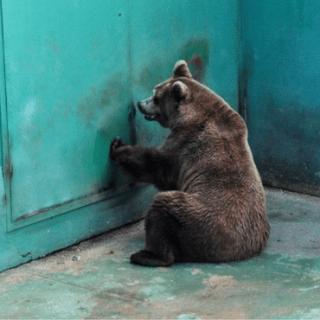 Zoo italiani tra sporcizia e sofferenza (fonte immagine: holidogtime.com)