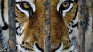 Gli zoo italiani fotografati da Lav e Born Free Fundation