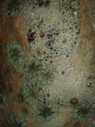 Groupings of lichens