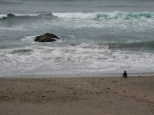 Someone engages in some deep thought at North Salmon Creek Beach.