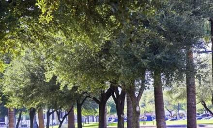 L.A. City Free Street Tree Program